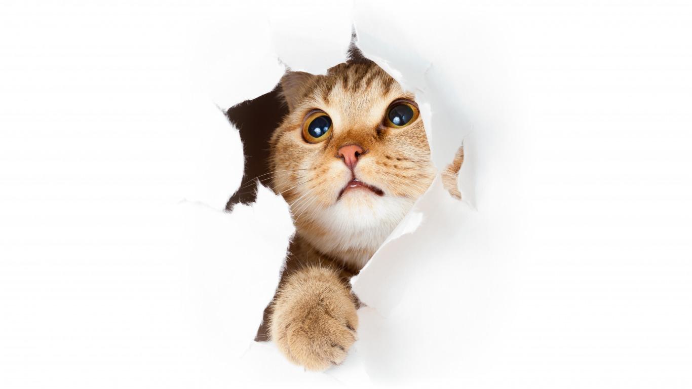 Как отучить кота драть мебель? — Кот Обормот