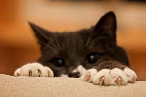 как отучить кошку